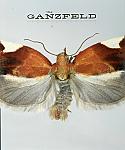 The Ganzfeld #3